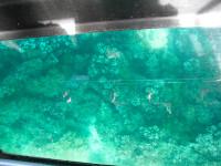 01 04 グラスボート 4
